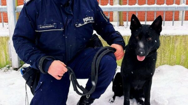 """Pies w policji, policyjny pies, psy, policyjne pszy, POLICJANCI ZE STRZELEC OPOLSKICH MAJĄ NOWEGO PSA """"OTEL"""""""