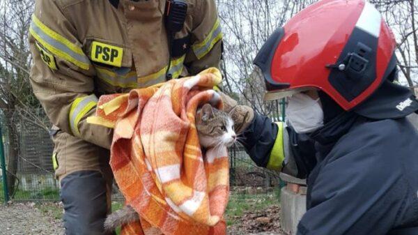 Strażacy uratowali kota, który wszedł do betonowej studzienki i miał uszkodzoną łapę. Strażacy nadali mu już imię.(Zdjęcia)