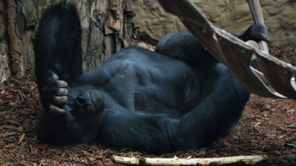 Pawilony w opolskim zoo ponownie otwarte!