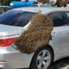 Gniazdo pszczół spadło na samochody strażaków na terenie remizy w Kędzierzynie Koźlu.
