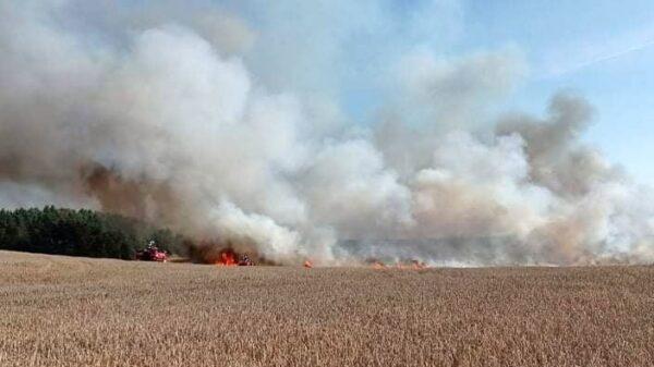 Pożar zboża pod Gierowem w akcji dromader i śmigłowiec gaśniczy.(Zdjęcia)