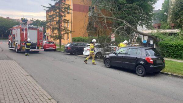 Drzewo spadło na samochód na osiedlu Dambonia w Opolu.(Wideo)