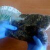 36-latek zatrzymany za posiadanie i handel narkotykami w gminie ...