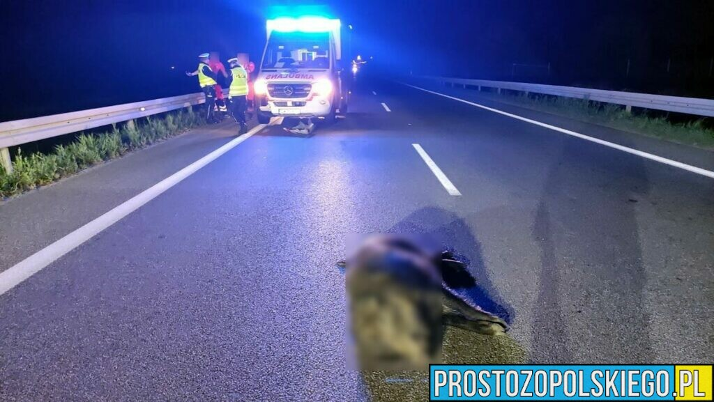 Zderzenie karetki z dzikiem na obwodnicy Opola.(Zdjęcia)